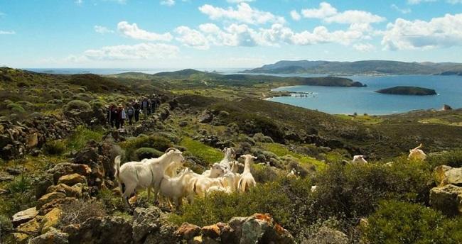 Πέντε νησιά Αιγαίου στις 7 πιο απειλούμενες