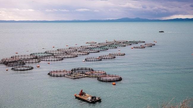Γιατί πωλούνται με ζημιά τα ελληνικά ψάρια